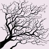 Διανυσματικό όμορφο δέντρο Στοκ Εικόνα