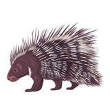 Διανυσματικό Porcupine απεικόνισης που απομονώνεται απεικόνιση αποθεμάτων