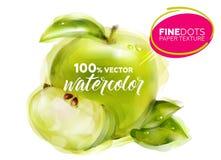Διανυσματικό Watercolor η πράσινη Apple με τη λεπτή σύσταση εγγράφου σημείων Στοκ εικόνα με δικαίωμα ελεύθερης χρήσης