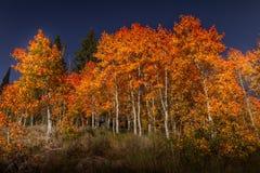 Διαποτισμένη σόου άποψη του χρώματος φύλλων φθινοπώρου στο σούρουπο στοκ φωτογραφίες