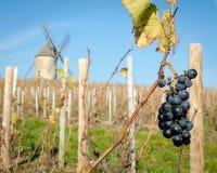 Διαρκέστε τη δέσμη των σταφυλιών Beaujolais, Γαλλία στοκ εικόνες