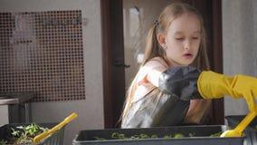 Διασκέδαση λίγη προσοχή κηπουρών για τις εγκαταστάσεις Χαριτωμένος λίγο κορίτσι παιδιών που φυτεύει τα σπορόφυτα Έννοια, φύση και απόθεμα βίντεο
