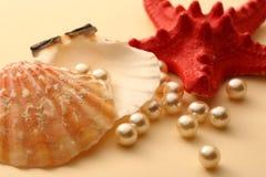 Άσπρα μαργαριτάρια στο θαλασσινό κοχύλι Στοκ Εικόνα