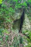 Διασπασμένος στις ρίζες βράχου και δέντρων Στοκ Εικόνες