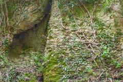 Διασπασμένος στις ρίζες βράχου και δέντρων Στοκ φωτογραφίες με δικαίωμα ελεύθερης χρήσης