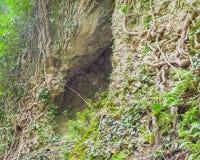 Διασπασμένος στις ρίζες βράχου και δέντρων Στοκ εικόνα με δικαίωμα ελεύθερης χρήσης