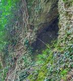 Διασπασμένος στις ρίζες βράχου και δέντρων Στοκ φωτογραφία με δικαίωμα ελεύθερης χρήσης