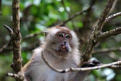 Διασπασμένος χειλικός πίθηκος σε ένα δέντρο Στοκ Φωτογραφίες