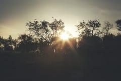 διαστημικά δέντρα κειμένων ηλιοβασιλέματός σας Στοκ εικόνες με δικαίωμα ελεύθερης χρήσης