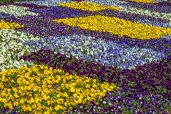 Διαταγμένη καλλιέργεια των ζωηρόχρωμων λουλουδιών Στοκ Εικόνες