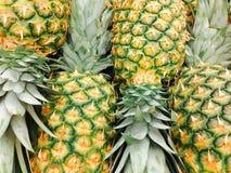 Διαταγμένοι ανανάδες στοκ εικόνα