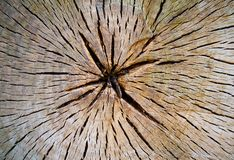 Διατομή κορμών δέντρων στοκ φωτογραφίες με δικαίωμα ελεύθερης χρήσης