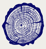 Διατομή του κολοβώματος δέντρων Στοκ Φωτογραφία