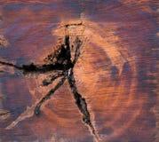 Διατομή του κορμού δέντρων Στοκ Φωτογραφία