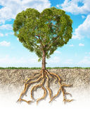 Διατομή του χώματος που παρουσιάζει καρδιά δέντρων που διαμορφώνεται, με τη ρίζα του Στοκ εικόνα με δικαίωμα ελεύθερης χρήσης