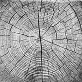 Διατομική άποψη ενός ξύλου τελών περικοπών κούτσουρων Στοκ φωτογραφία με δικαίωμα ελεύθερης χρήσης