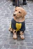 Διαφήμιση για τα ενδύματα και τα παπούτσια σκυλιών στοκ φωτογραφία