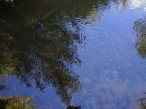Διαφανές νερό στο κοπάδι 1 Στοκ Εικόνες