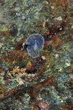 Διαφανές flatworm στο πρόσωπο βράχου στοκ εικόνα με δικαίωμα ελεύθερης χρήσης
