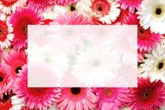 Διαφανής κενή ευχετήρια κάρτα στην επιλογή του διάφορου ζωηρόχρωμου υποβάθρου λουλουδιών gerbera στοκ εικόνες με δικαίωμα ελεύθερης χρήσης