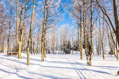 Διαφανής κρύος αέρας του δάσους Στοκ Εικόνες