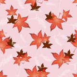 Διαφανή κόκκινα φύλλα φθινοπώρου Στοκ Εικόνες
