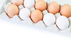 Διαφορετικά αυγά στο πακέτο χαρτοκιβωτίων που απομονώνεται στο λευκό Στοκ Φωτογραφία