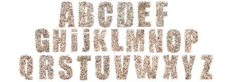 Διαφορετικά είδη ρυζιού, σιτάρι που βρίσκεται και που δημιουργεί ένα αλφάβητο που απομονώνεται Στοκ Εικόνες