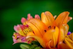 Διαφορετικά είδη φρέσκων λουλουδιών Στοκ Εικόνα