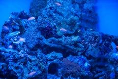 Διαφορετικά θαλάσσια ζώα Στοκ φωτογραφία με δικαίωμα ελεύθερης χρήσης