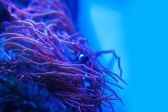 Διαφορετικά θαλάσσια ζώα Στοκ Εικόνες