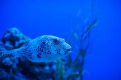 Διαφορετικά θαλάσσια ζώα Στοκ εικόνα με δικαίωμα ελεύθερης χρήσης