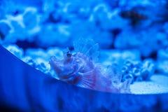 Διαφορετικά θαλάσσια ζώα Στοκ Εικόνα