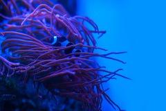 Διαφορετικά θαλάσσια ζώα Στοκ φωτογραφίες με δικαίωμα ελεύθερης χρήσης