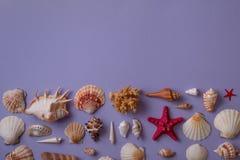 Διαφορετικά θαλασσινά κοχύλια στο κατώτατο σημείο Στοκ εικόνες με δικαίωμα ελεύθερης χρήσης