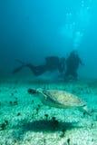Διαφορετικά και θαλάσσια ζώα Στοκ εικόνα με δικαίωμα ελεύθερης χρήσης
