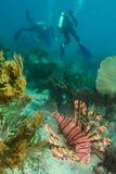 Διαφορετικά και θαλάσσια ζώα Στοκ Εικόνες