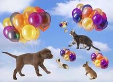 Διαφορετικά κατοικίδια ζώα που πετούν με τα μπαλόνια Στοκ φωτογραφία με δικαίωμα ελεύθερης χρήσης
