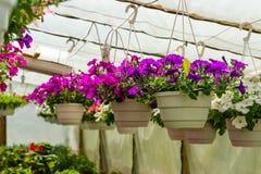 Διαφορετικά λουλούδια στο θερμοκήπιο Στοκ Εικόνα