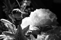 Διαφορετικά μέσα λουλουδιών που βγήκαν Στοκ Φωτογραφίες