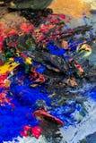 Διαφορετικά μικτά χρώματα - κίτρινα, κόκκινα, μπλε και μαύρα Στοκ Εικόνες