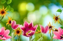 Διαφορετικά λουλούδια στην κινηματογράφηση σε πρώτο πλάνο κήπων Στοκ φωτογραφίες με δικαίωμα ελεύθερης χρήσης