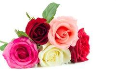 Διαφορετικά τριαντάφυλλα χρώματος στο άσπρο υπόβαθρο Στοκ εικόνα με δικαίωμα ελεύθερης χρήσης