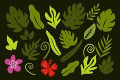 Διαφορετικά τροπικά φύλλα στο πράσινο υπόβαθρο Στοκ φωτογραφία με δικαίωμα ελεύθερης χρήσης