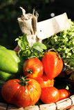 Διαφορετικά υγρά λαχανικά Στοκ Φωτογραφία