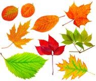 διαφορετικά φύλλα ερμπα&r στοκ εικόνες με δικαίωμα ελεύθερης χρήσης