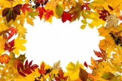διαφορετικά φύλλα φθινο& Στοκ Εικόνες
