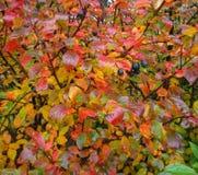 Διαφορετικά φύλλα και blak μούρα colorfull στα φυτά που είναι υγρά από τις βροχοπτώσεις Στοκ εικόνες με δικαίωμα ελεύθερης χρήσης
