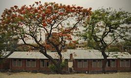 Διαφορετικά χρωματισμένα δέντρα στοκ εικόνες