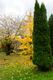 Διαφορετικά χρώματα στα δέντρα Βανκούβερ στοκ εικόνα